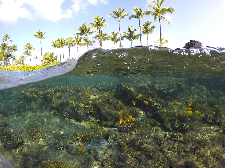 A Guide To Hawaii S Marine Life Hawaiian Airlines