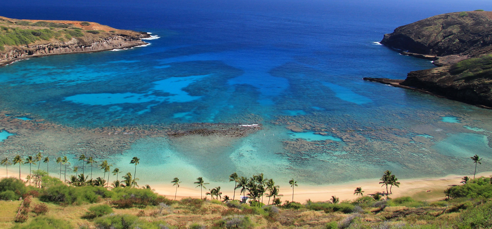 Hawaii S Coral Reefs And Reef Preservation Hawaiian Airlines